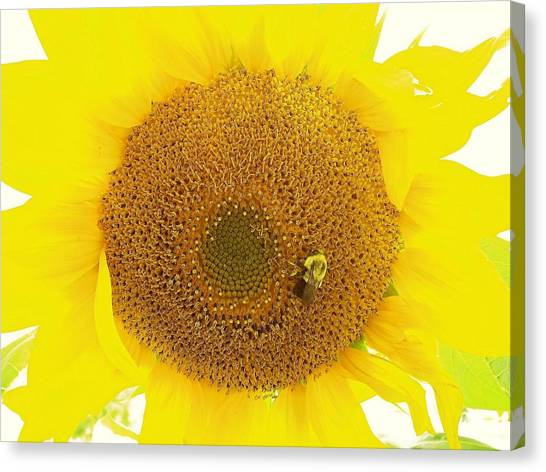 Sunflower And The Happy Bee Canvas Print