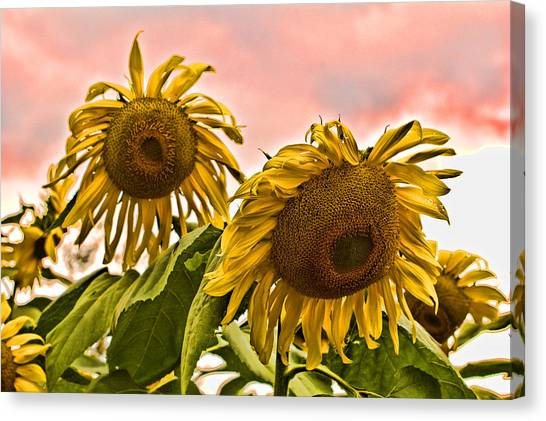 Sunflower Art 1 Canvas Print