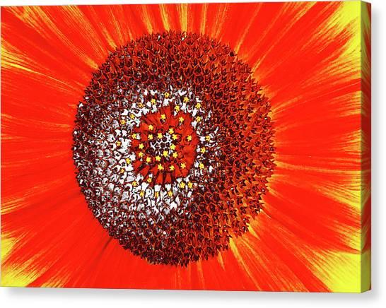 Sunflower Close Canvas Print