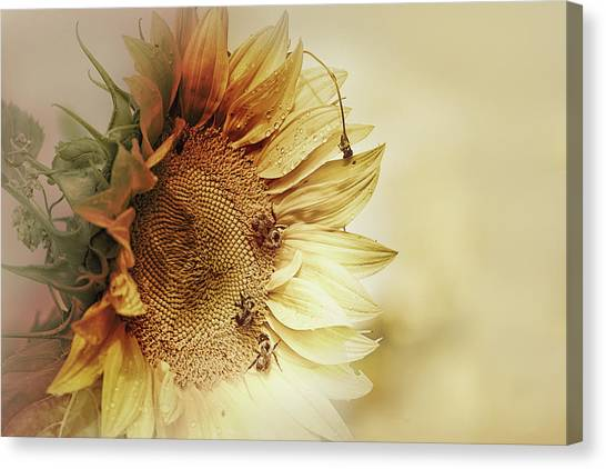 Sunflower Seeds Canvas Print - Sunflower Days by Susan Capuano