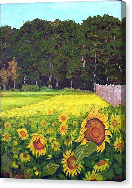 Sunflower Field Canvas Print by Hilary England