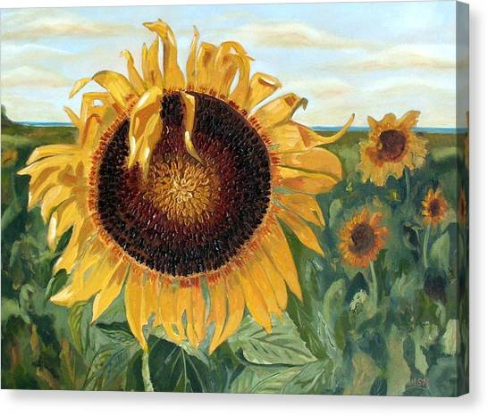Sunflower Fields Forever  Canvas Print by Maria Soto Robbins