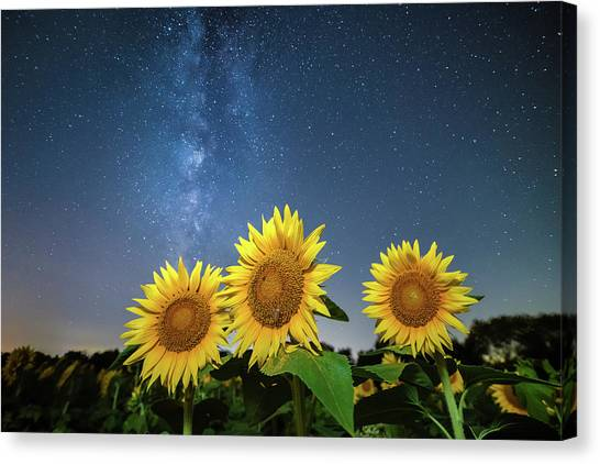Sunflower Galaxy II Canvas Print