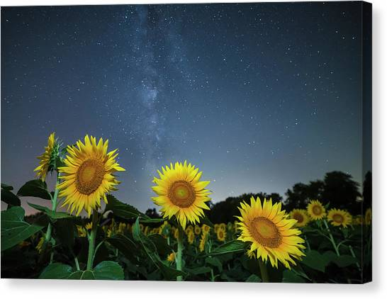Sunflower Galaxy V Canvas Print