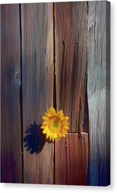Sunflower Seeds Canvas Print - Sunflower In Barn Wood by Garry Gay