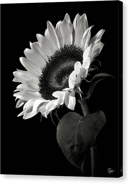 Black and white flower canvas print sunflower in black and white by endre balogh