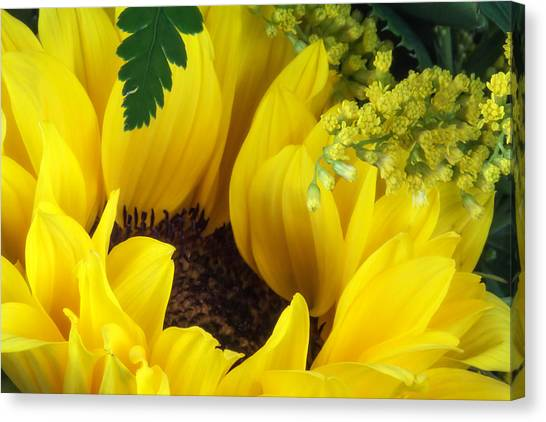 Bloom Canvas Print - Sunflower Macro by Tom Mc Nemar