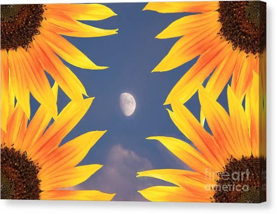 Sunflower Moon Canvas Print