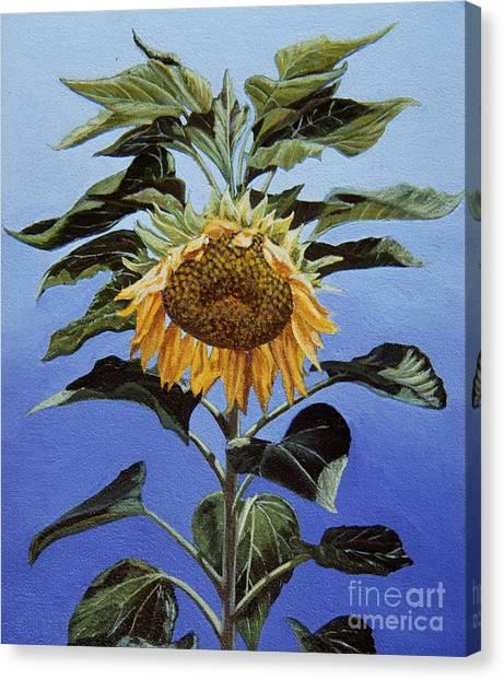 Sunflower Nodding Canvas Print by Jiji Lee