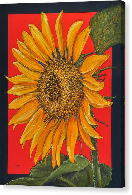 Da153 Sunflower On Red By Daniel Adams Canvas Print