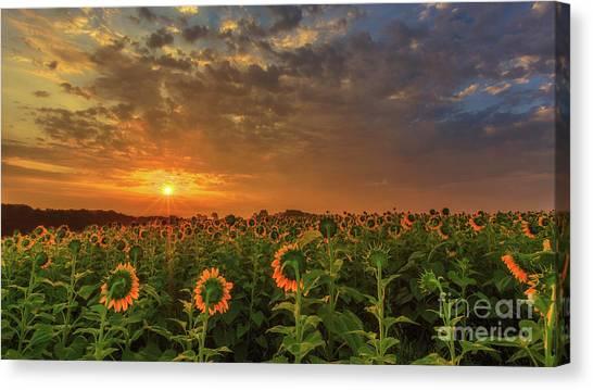 Sunflower Peak Canvas Print