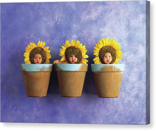 Sunflower Canvas Print - Sunflower Pots by Anne Geddes