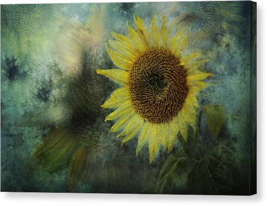 Canvas Print featuring the photograph Sunflower Sea by Belinda Greb