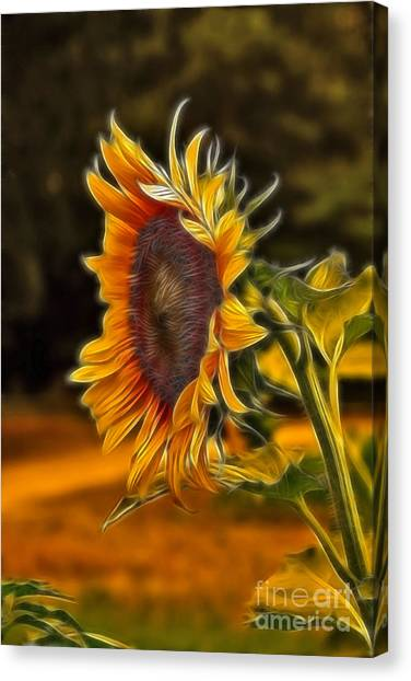 Sunflower Canvas Print - Sunflower Series by Wendy Mogul