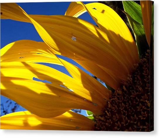Sunflower Shadows Canvas Print