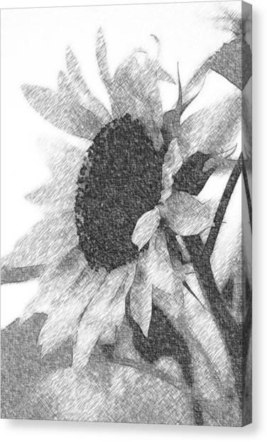Canvas Print - Sunflower Sketch by Modern Art