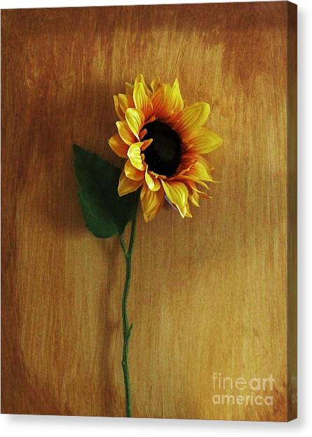 Sunflower Standing Canvas Print by Marsha Heiken