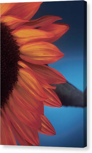 Sunflower Study Canvas Print by Bob Coates