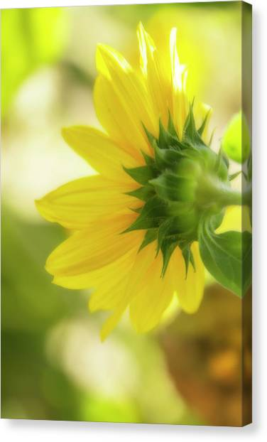 Summer Canvas Print - Sunflower Sweet by Terry Davis