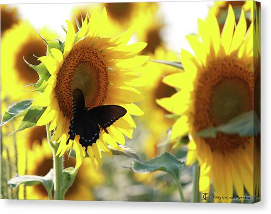 Sigma Gamma Rho Canvas Print - Sunflower by Tammy Groves Thornton