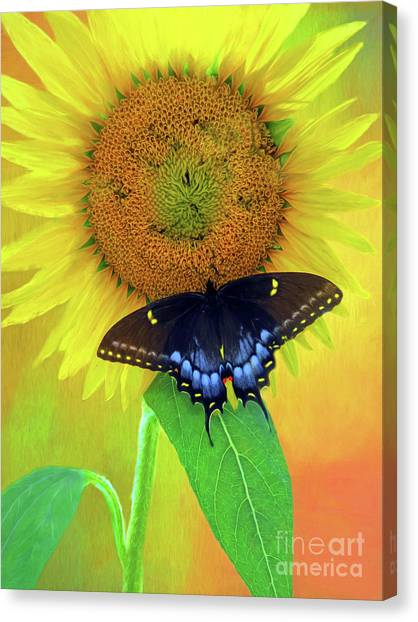 Sunflower With Company Canvas Print