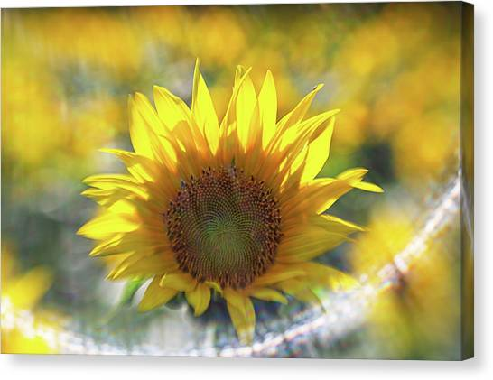 Sunflower With Lens Flare Canvas Print