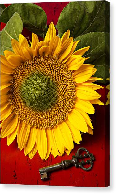Sunflower Seeds Canvas Print - Sunflower With Old Key by Garry Gay
