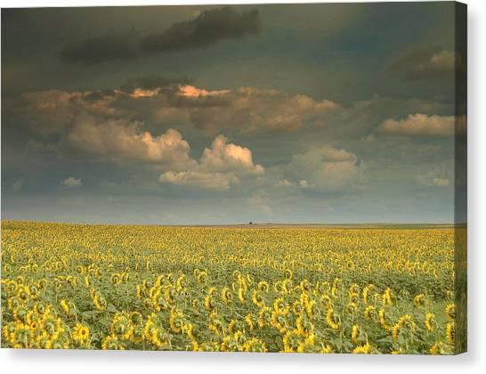 Sunflower World.. Canvas Print