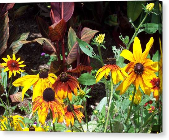 Sunflowerland Canvas Print by Jean Booth