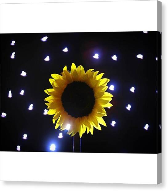 Sunflowers Canvas Print - #sunflowers & #stars Series  #flower by Andrew Nourse