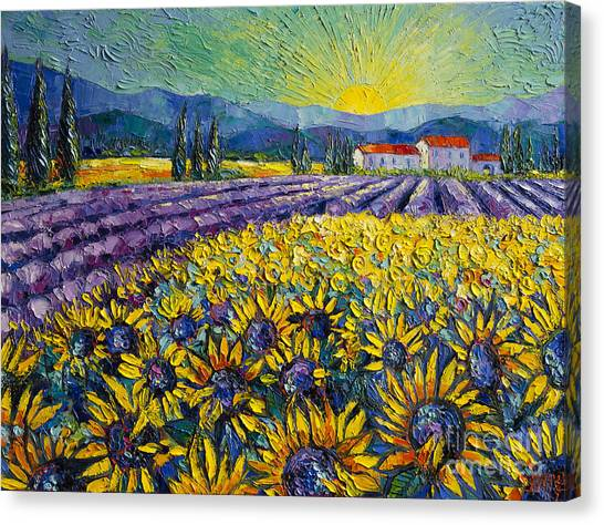 Sunflowers And Lavender Field - The Colors Of Provence Modern Impressionist Palette Knife Painting Canvas Print