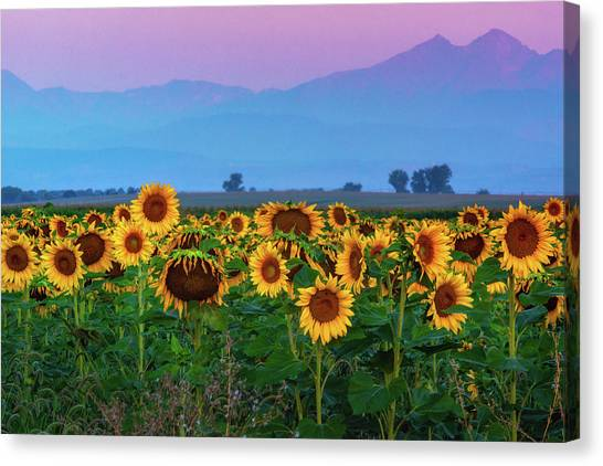 Canvas Print featuring the photograph Sunflowers At Dawn by John De Bord