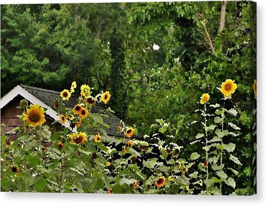 Sunflowers At The Good Earth Market Canvas Print