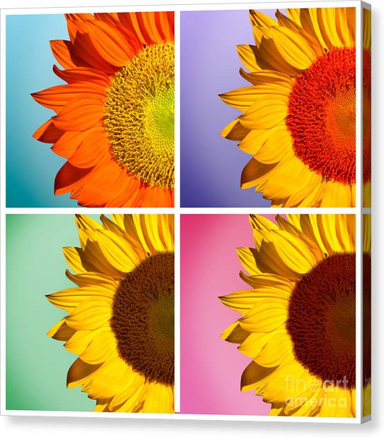 Sunflowers Canvas Print - Sunflowers Collage by Mark Ashkenazi