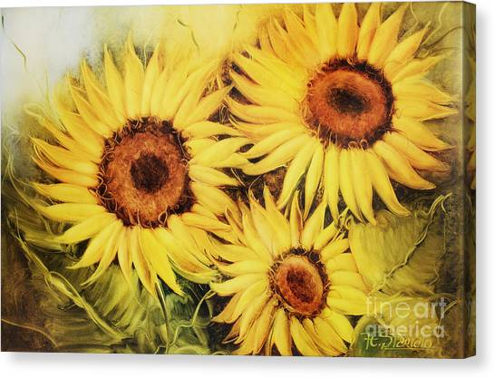Sunflowers Canvas Print by Fatima Stamato