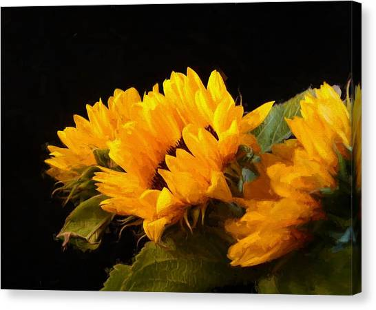 Sunflowers On A Black Background Canvas Print