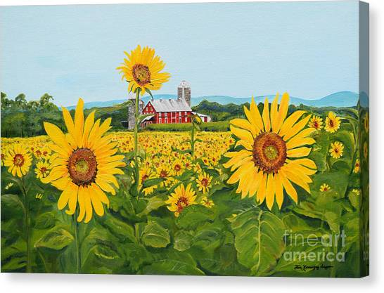 Sunflowers On Route 45 - Pennsylvania- Autumn Glow Canvas Print