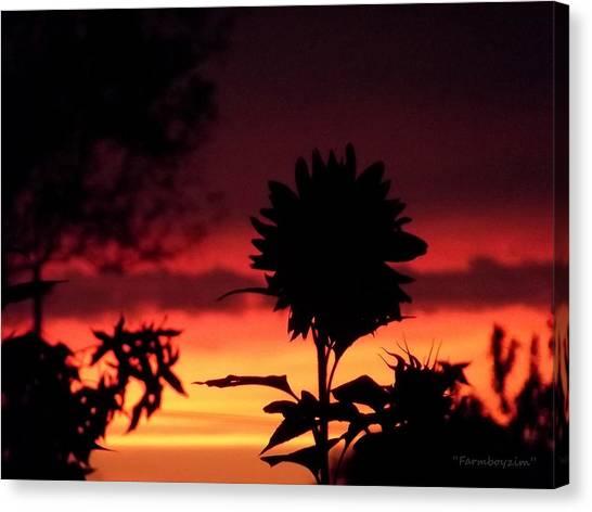 Sunflower's Sunset Canvas Print
