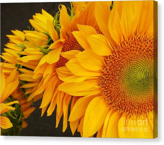 Sunflowers Train Canvas Print