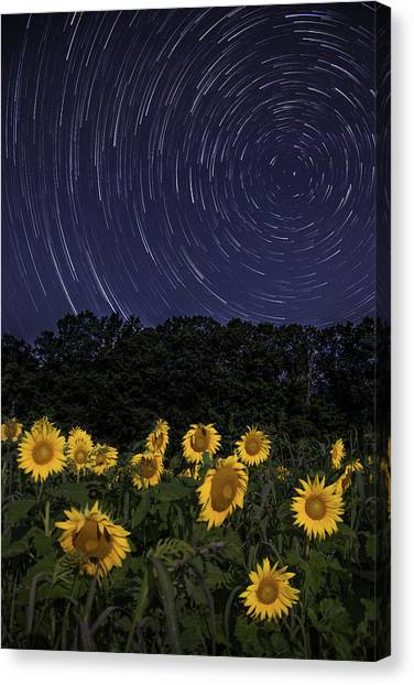 Sunflowers Under The Night Sky Canvas Print