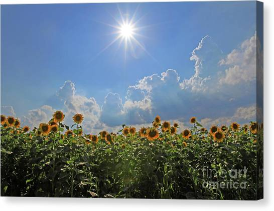 Sunflowers With Sun And Clouds 1 Canvas Print
