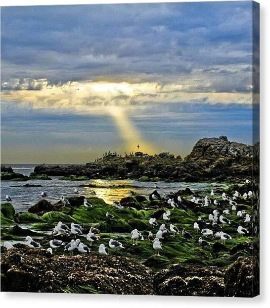 Water Birds Canvas Print - #sunlight #beach #ocean #birds #water by Michael Amos