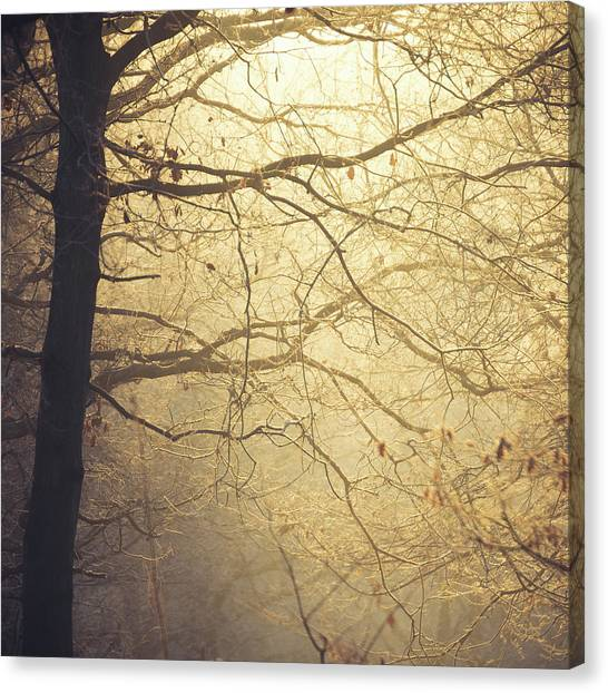 Sherwood Forest Canvas Print - Sunlight by Chris Dale