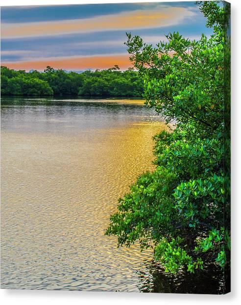 Mangrove Trees Canvas Print - Sunlight On The Marsh by Steven Ainsworth