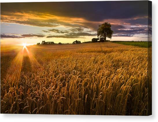 Thunderclouds Canvas Print - Sunlight On The Wheat Fields by Debra and Dave Vanderlaan