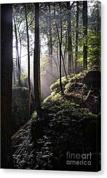 Sunlight Through Trees At Beartown State Park 3129c Canvas Print