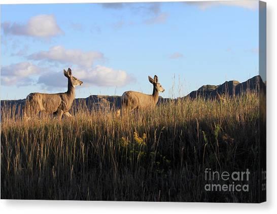 Sunlit Deer  Canvas Print