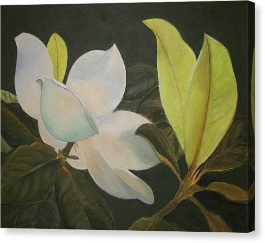 Sunlit Magnolia Canvas Print