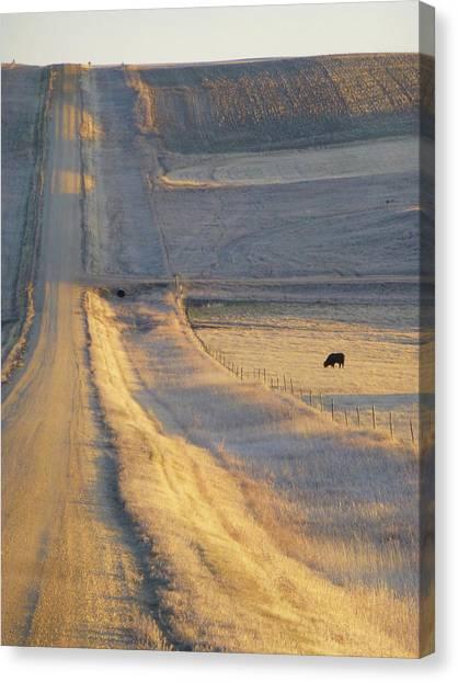Sunlit Road Canvas Print