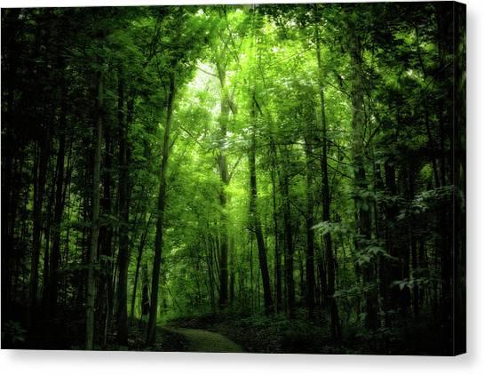 Canvas Print featuring the photograph Sunlit Woodland Path by Lars Lentz